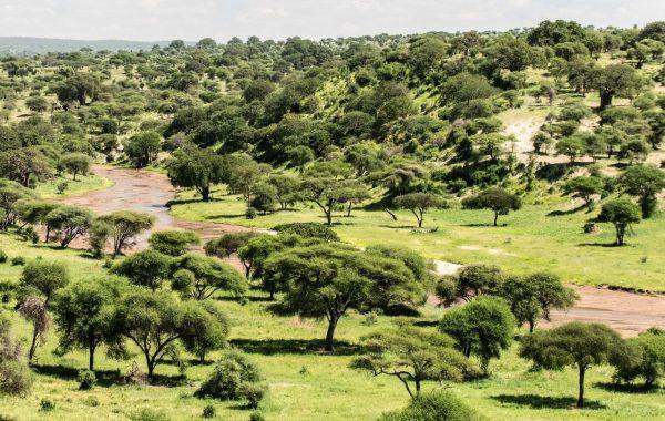 Giraffe Expeditions Tanzania