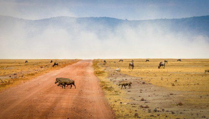 ngorongoro areas