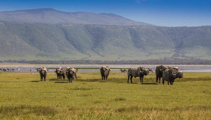 ngorongoro highland1