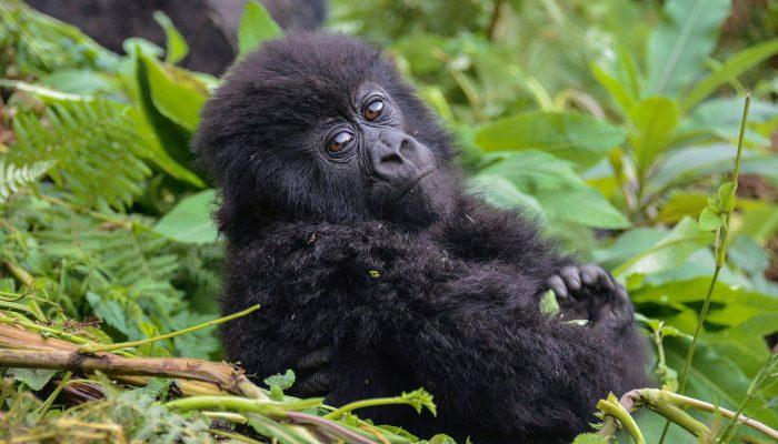 trakking uganda